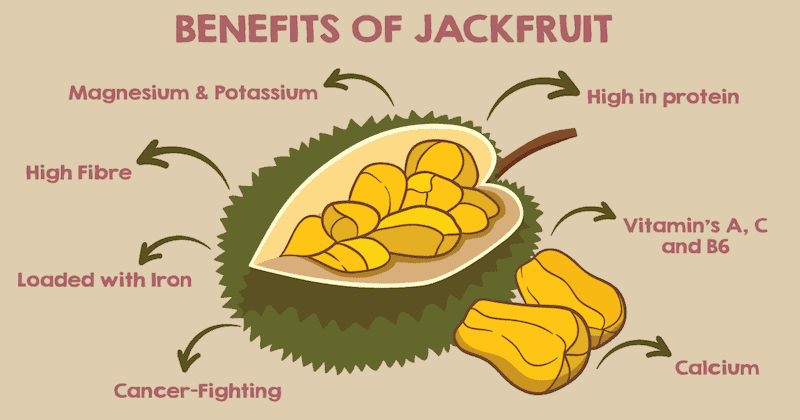 Know The Real Benefits of Having Jackfruit | Stuffshuf